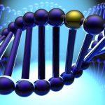 Генетическая предрасположенность к артриту